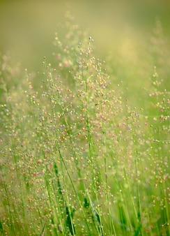 Flores de verão, campo de flores.