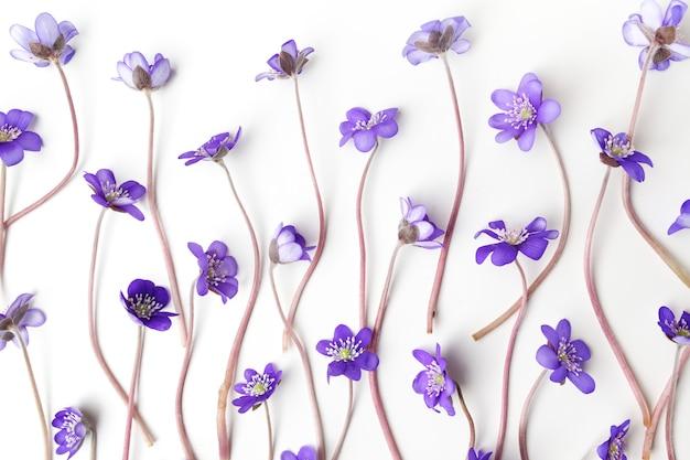 Flores de viola azul isoladas