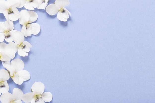 Flores de viola na cor de fundo de papel