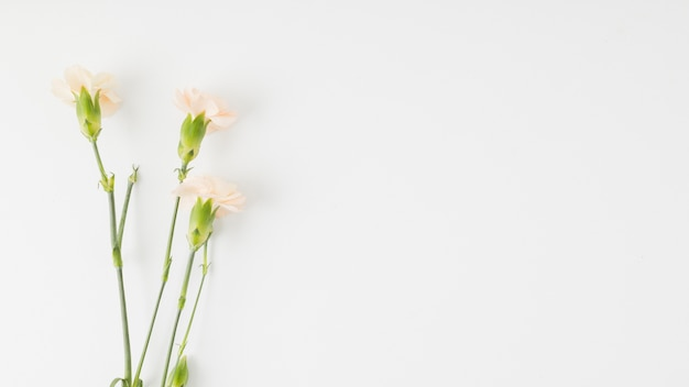 Flores de vista superior com espaço de cópia