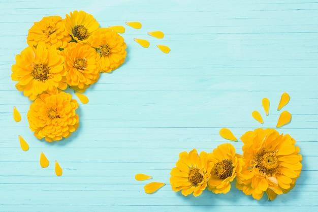Flores de zínia amarelas em fundo azul de madeira