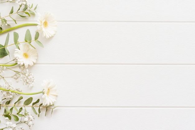 Flores decorativas coloridas daisy em um fundo