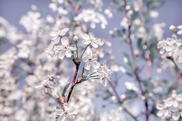 Flores delicadas em tons de menta em um bom fundo. tonificação de menta.