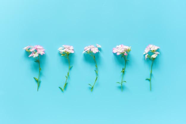 Flores delicadas pequenas naturais em uma fileira com espaço da cópia. olá conceito primavera ou verão, dia das mulheres