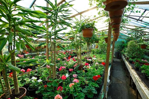 Flores dentro de uma estufa no centro do jardim, foto grande angular