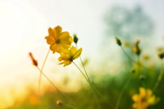 Flores desabrochando com luz de fundo natural
