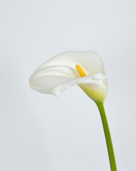 Flores desabrochando de perto