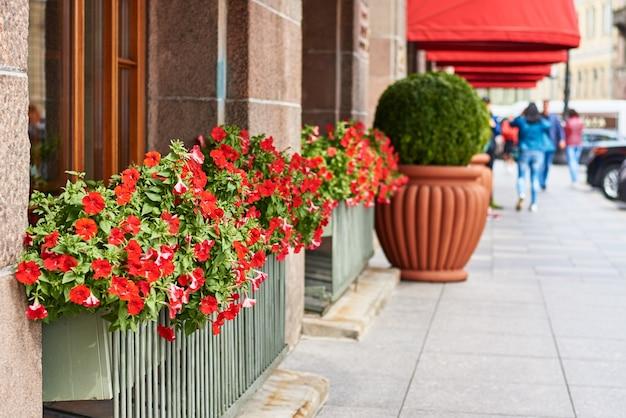 Flores desabrochando na cidade
