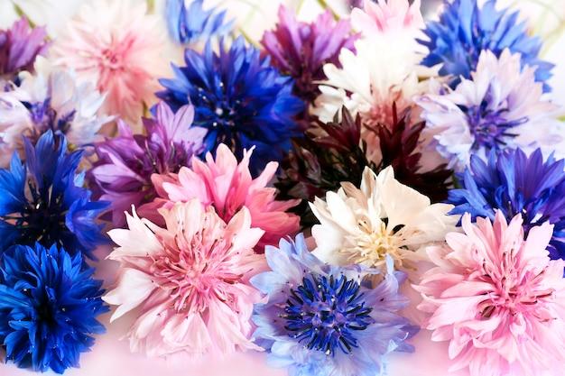 Flores do campo e do prado centáureas de cores diferentes Foto Premium