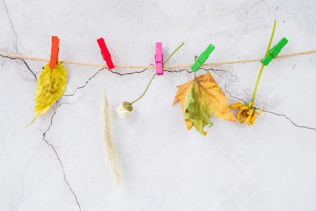 Flores do campo em prendedores de roupa