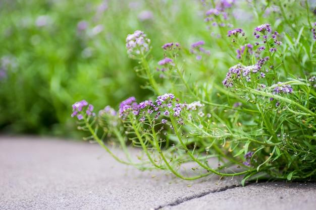 Flores do jardim de verão