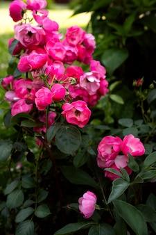 Flores durante o período de floração no parque fotos de flores