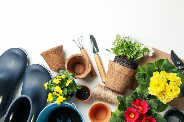 Flores e ferramentas de jardinagem em branco, vista superior
