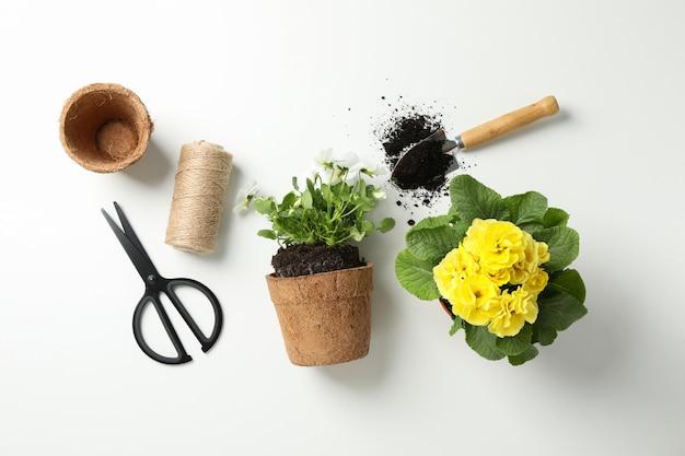 Flores e ferramentas de jardinagem em fundo branco, vista superior
