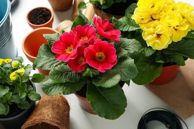 Flores e ferramentas de jardinagem na mesa branca, close-up
