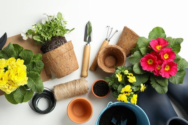Flores e ferramentas de jardinagem na mesa branca, vista superior