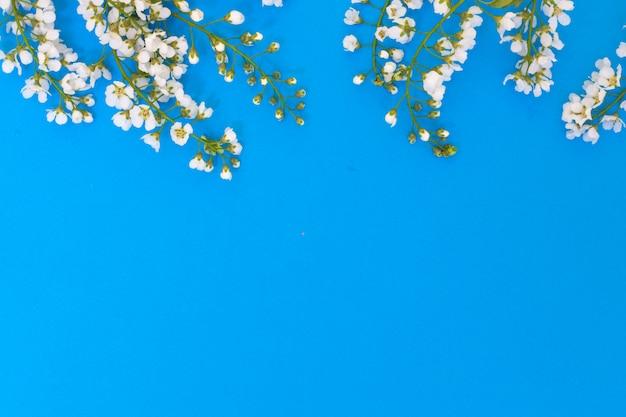 Flores e folhas de cerejeira sobre um fundo azul.