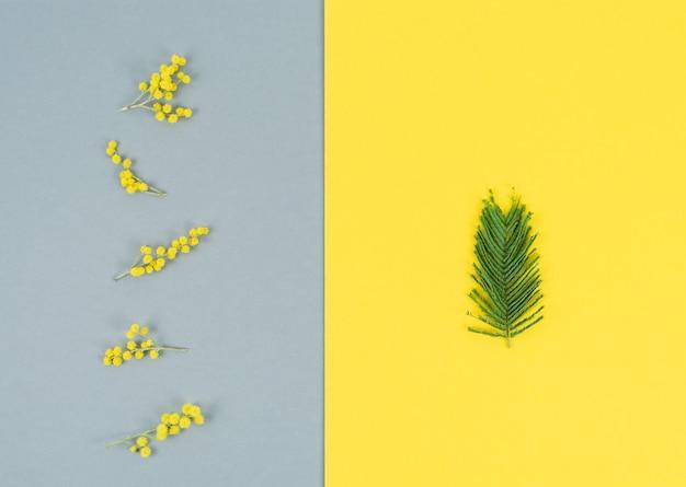Flores e folhas de mimosa em fundo cinza e amarelo verticalmente. cor do ano. copie o espaço.