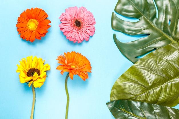 Flores e folhas de monstera