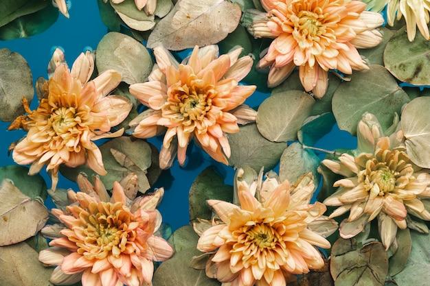 Flores e folhas na água