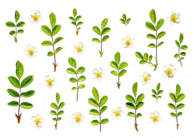 Flores e folhas planas lay design floral