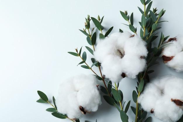 Flores e galhos de plantas de algodão com folhas na superfície branca