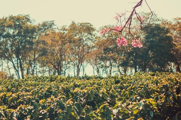 Flores e plantação de fazenda de café