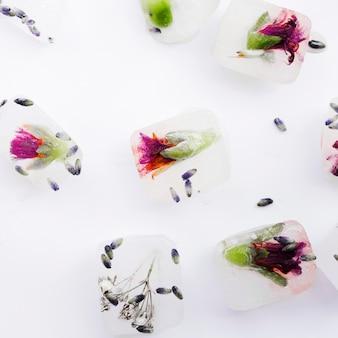 Flores e sementes em cubos de gelo
