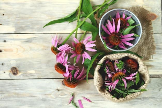 Flores echinacea. erva medicinal.