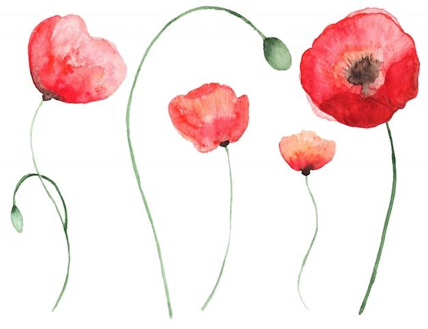 Flores em aquarela abstratas