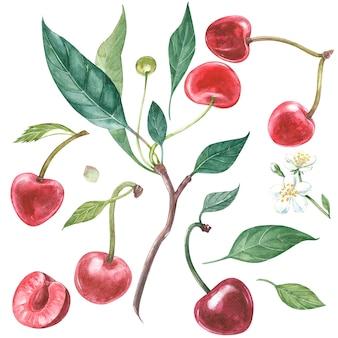 Flores em aquarela de cerejeira e folhas desenhadas à mão