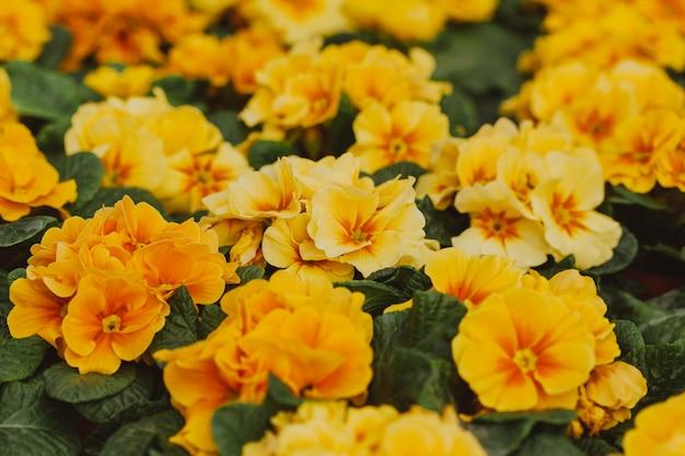 Flores em estufa