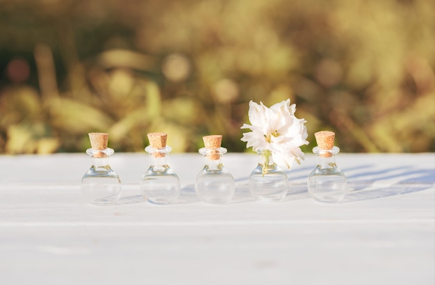 Flores em flores background.beautiful de madeira de gelichrysum. outdors na aldeia, pôr do sol à noite, luz solar. o conceito de individualidade está fora da caixa, não como todo mundo.