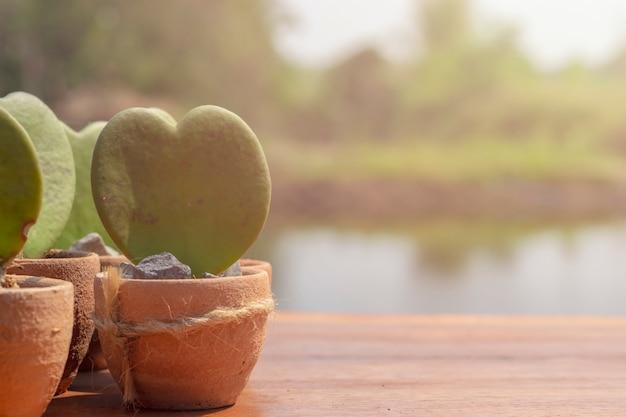 Flores em forma de coração