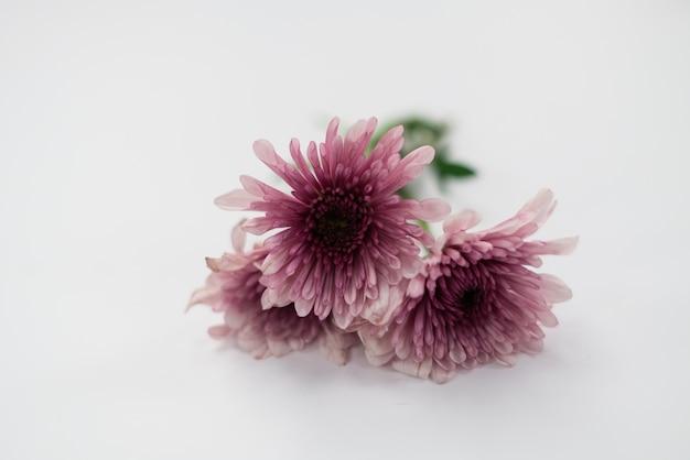 Flores em fundo branco