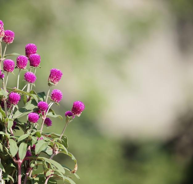 Flores em fundo desfocado