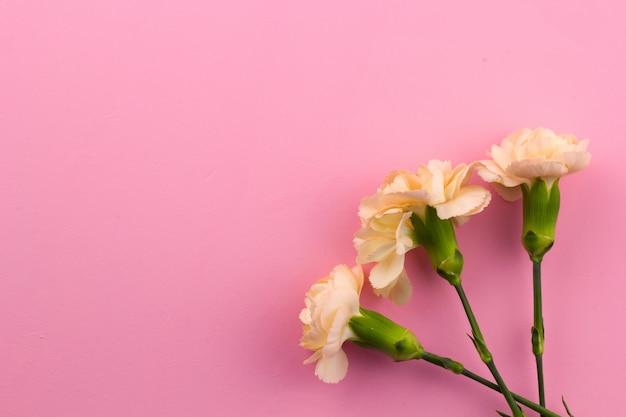 Flores em fundo rosa