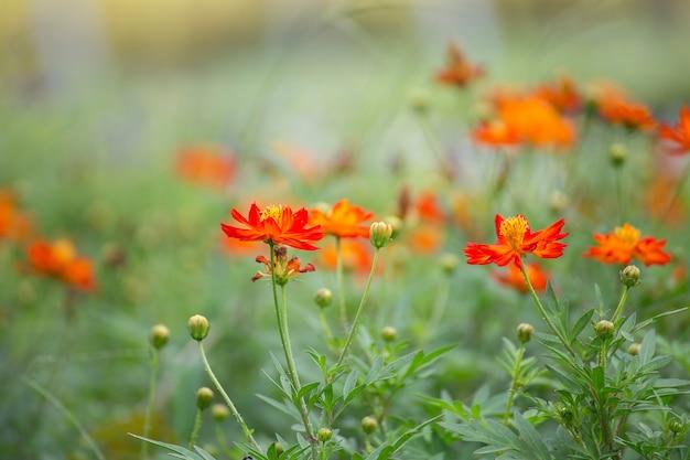 Flores em muitas cores no jardim.