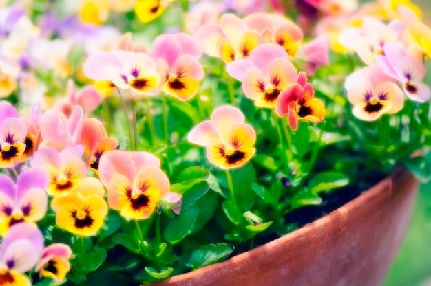 Flores em pote, close-up