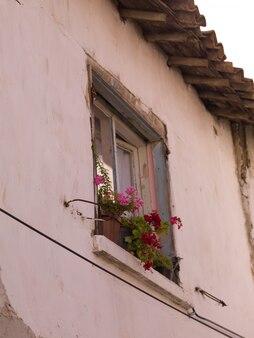 Flores, em, um, janela, em, kusadasi, peru