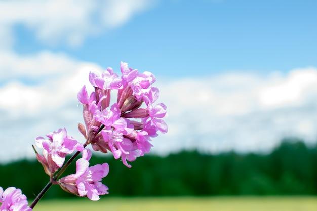 Flores em um prado como pano de fundo