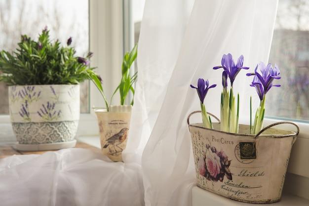 Flores em uma panela no peitoril da janela