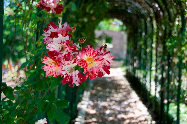 Flores em uma passarela