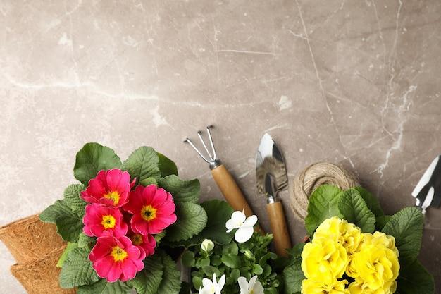 Flores em vasos e ferramentas de jardinagem em fundo cinza, vista superior
