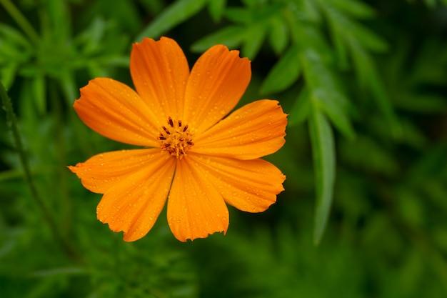 Flores exóticas da ilha de madagascar
