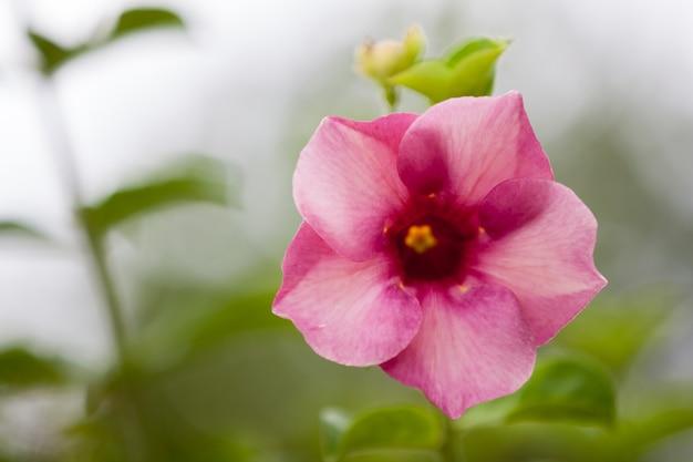 Flores exóticas locais muito coloridas e bonitas