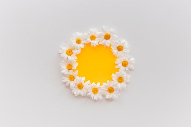 Flores frescas daisy dispostas em forma circular em papel laranja contra um pano de fundo branco