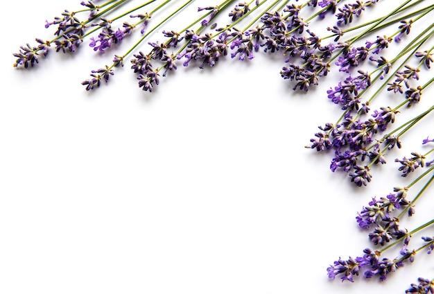 Flores frescas de buquê de lavanda, vista superior em fundo branco