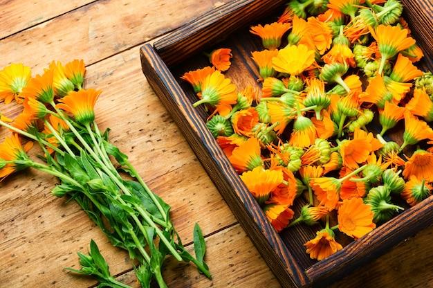 Flores frescas de calêndula em fitoterapia. marigold, ervas curativas em fundo de madeira rústico.