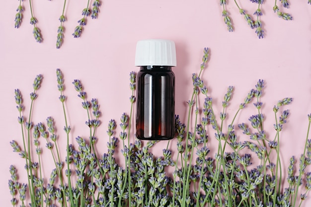 Flores frescas de lavanda e óleo essencial de garrafa em rosa